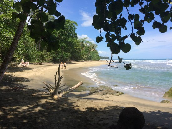 Cocles, Costa Rica: On and around the beach
