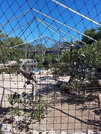 Tavernier, FL: Wild Bird Rehab