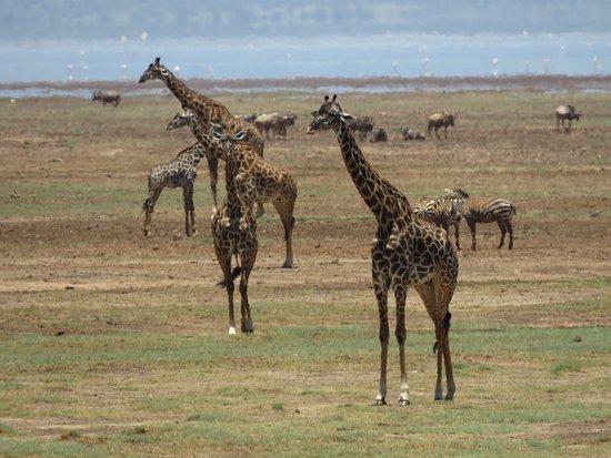 Lake Manyara National Park, Tanzania: photo2.jpg