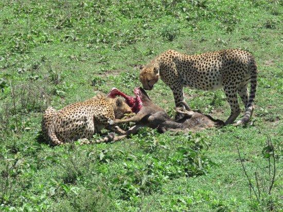 Région d'Arusha, Tanzanie : photo1.jpg