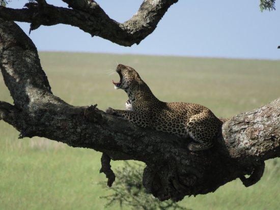 Région d'Arusha, Tanzanie : photo2.jpg