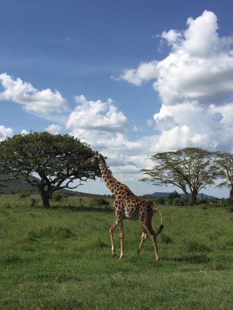 Región de Arusha, Tanzania: photo3.jpg