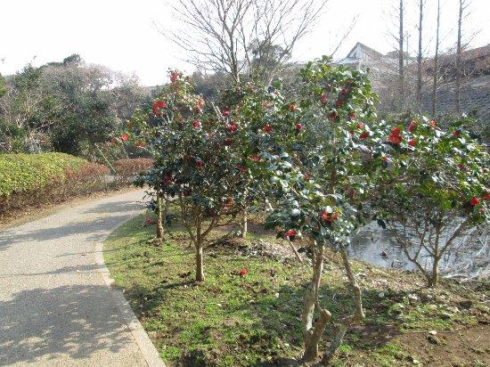 Tsubaki Park: 赤い椿