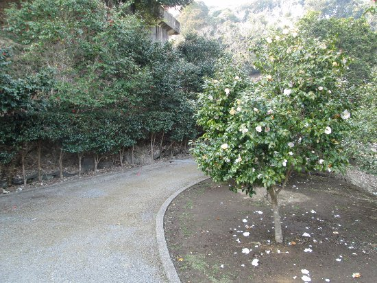 Tsubaki Park: 白い椿