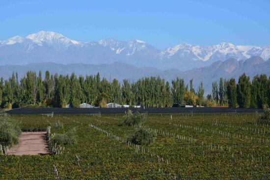 Lujan de Cuyo, Argentina: O vinhedo e a cordilheira ao fundo