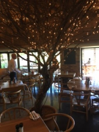 Kloof, Sudáfrica: the dining room with such a pretty tree in the middle