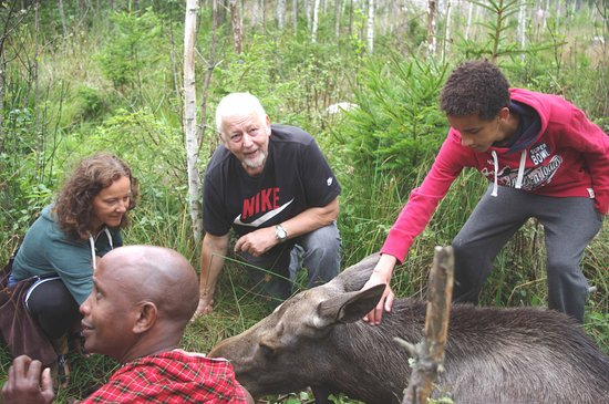 Nybro, Sverige: upptäck Sverige ♣ entdecke Schweden