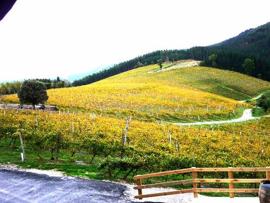 Muxika, Spain: Viña