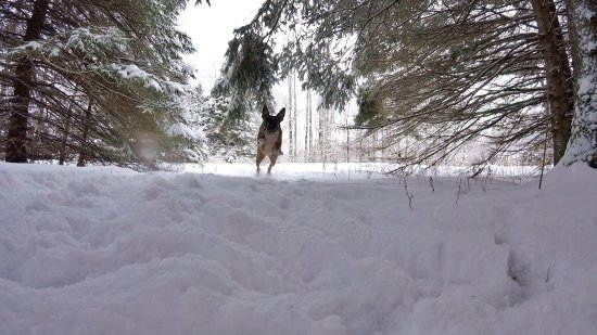 Horseshoe Valley, Canada: photo1.jpg