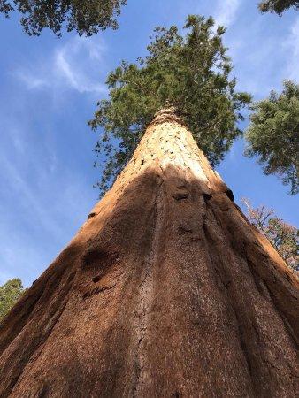 full-hookup-near-sequoia-national-park