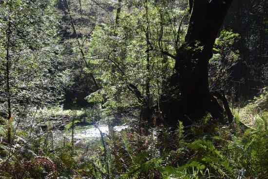 Mill Valley, CA: Una foto que muestra lo que es el follaje y la luz solar existente en el predio.