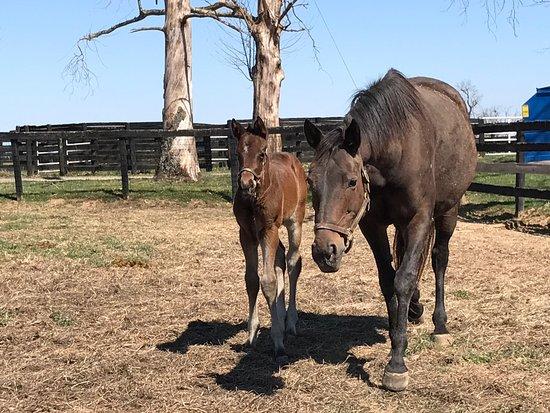 Thoroughbred Heritage Horse Farm Tours Lexington Ky