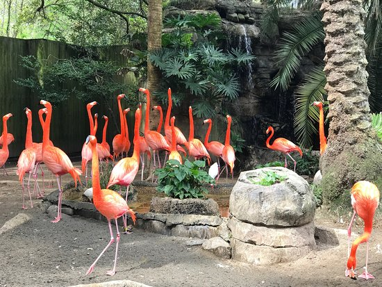 Photo of Zoo Audubon Zoo at 6500 Magazine St, New Orleans, LA 70118, United States