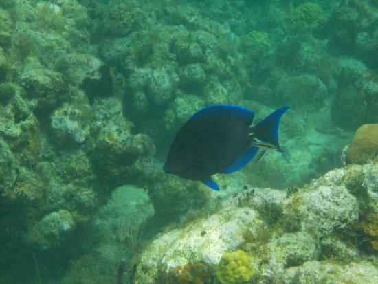 Coxen Hole, Honduras: Snorkeling
