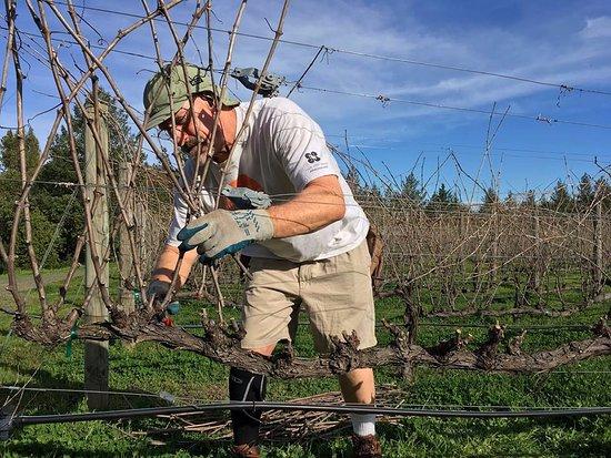 Napa Valley, Califórnia: Pruning time