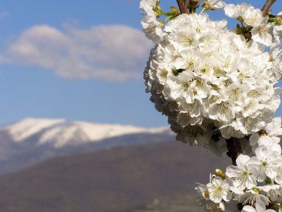 Valle del jerte cerezo en flor for Oficina de turismo plasencia
