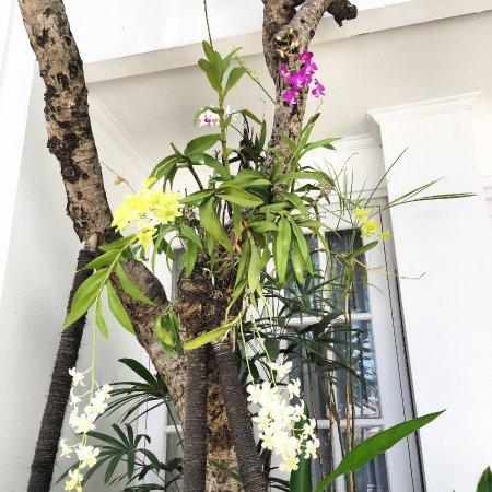 Foto de The Colony Hotel Bali