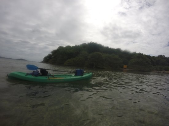 Barefoot Travelers Kayak Tour to Monkey Island: photo4.jpg