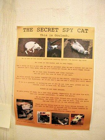 Νάντουιτς, UK: Goulash the cat