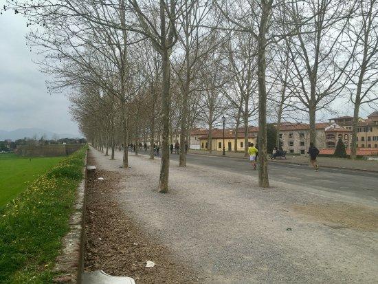 Le mura di Lucca: photo0.jpg