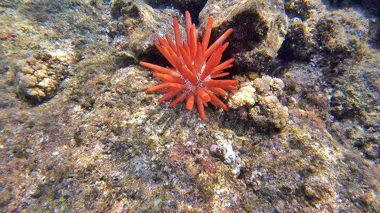 Captain Cook, Hawái: photo4.jpg
