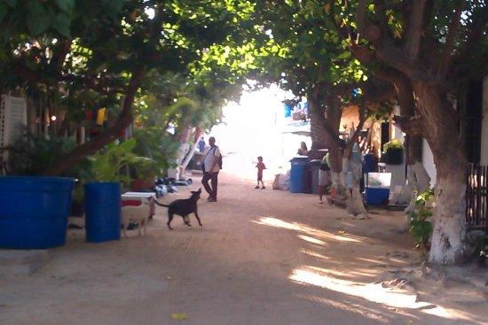 Posada Movida : Street on Gran Roque