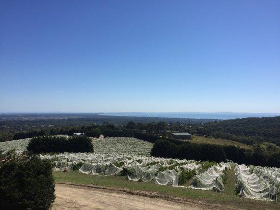 Rosebud, Austrália: photo0.jpg