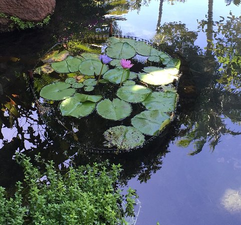 Lanai City, Χαβάη: photo3.jpg