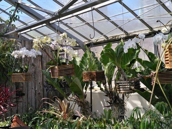 Photo of Botanical Garden Allan Gardens Conservatory at 19 Horticultural Ave, Toronto M5A 2P2, Canada