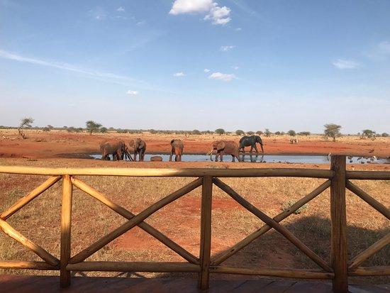 Voi, كينيا: This is a view from the main lodge veranda where we had tea.