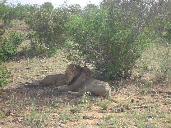 Joseph e Toyota Kenya safari - Day Trips : leoni, safari Tsavo est