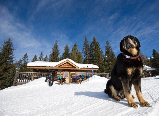 Radium Hot Springs, Canadá: Pet paradise