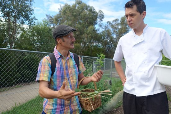 Casula, Australia: Chef learning about edible weeds