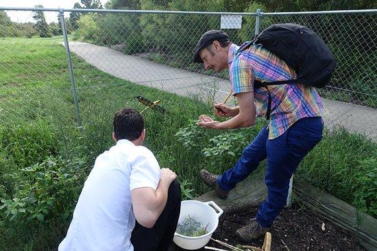Casula, Australia: Chef harvesting edible weeds