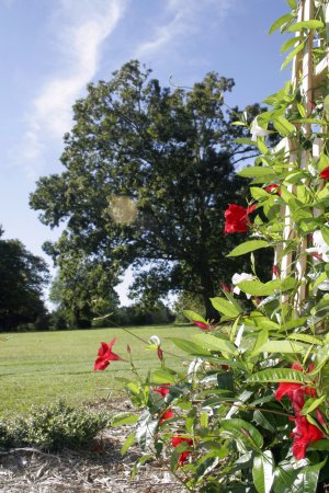 High Point, NC: One of several floral gardens on the Severn Oaks property