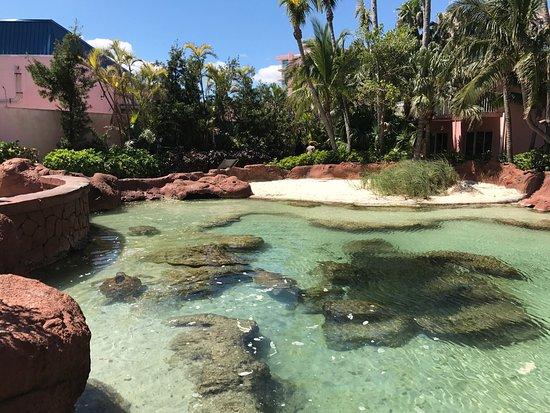Marine Habitat at Atlantis: photo3.jpg