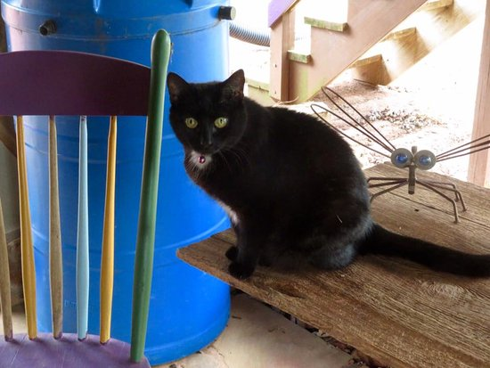 Cedar House Inn & Yurts: Karma can usually be found around her self-service food bowl! (Check out the rain barrel.)