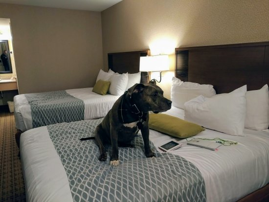 Accent Inn Vancouver Airport: I think I will stay right here!