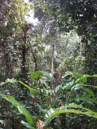 Petit-Bourg, Guadeloupe: L'environnement.