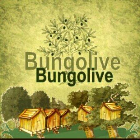 Cinarcik, Turkey: Bungolive Doğa Pansiyon  05373869603