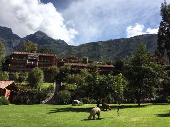 "Belmond Hotel Rio Sagrado: Hotel grounds with resident ""lawn mowers"""