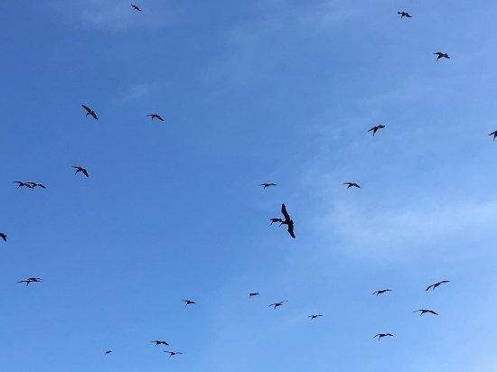 Playa Hermosa, Costa Rica: Birds coming to eat! FOllow the birds.