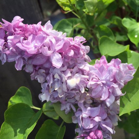 Calverton, Estado de Nueva York: Peconic River Herb Farm