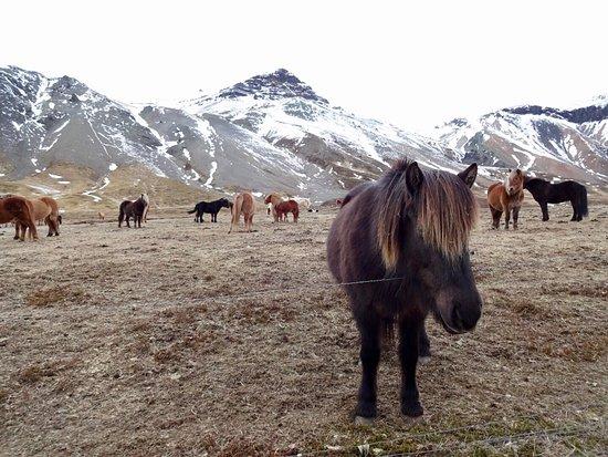 Hafnarfjordur, Island: photo1.jpg