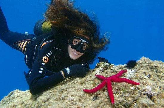 Scuba Diving Beginners 1 dive