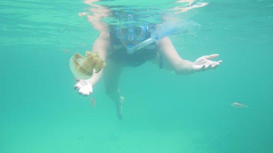Derawan Islands, อินโดนีเซีย: ubur ubur