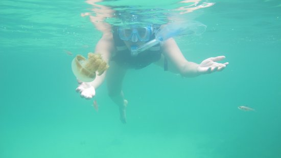 Derawan Islands, Indonesien: ubur ubur