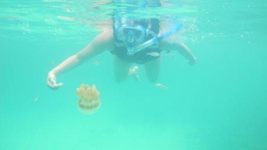 Derawan Islands, อินโดนีเซีย: berburu ubur ubur tanpa sengat