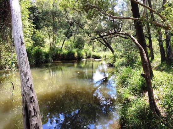 Barney View, Australia: Creek