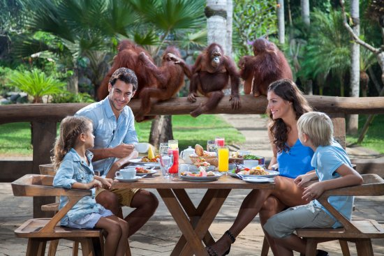 Sukawati, อินโดนีเซีย: Breakfast with Orangutan at Bali Zoo